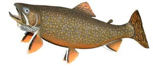 Brook Trout Fishing Lodges